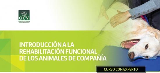 Introducción a la rehabilitación funcional de los animales de compañía